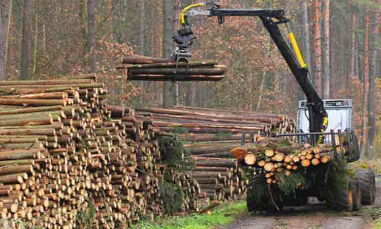 Garda-Forestiera-Suceava-a-descoperit-taieri-ilegale-de-arbori