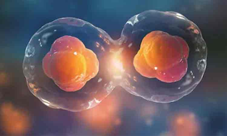 Sase alimentele care hranesc celulele canceroase si provoaca inflamatii in corp