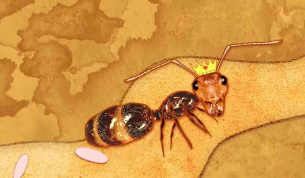 Ce fac furnicile in timpul epidemiei