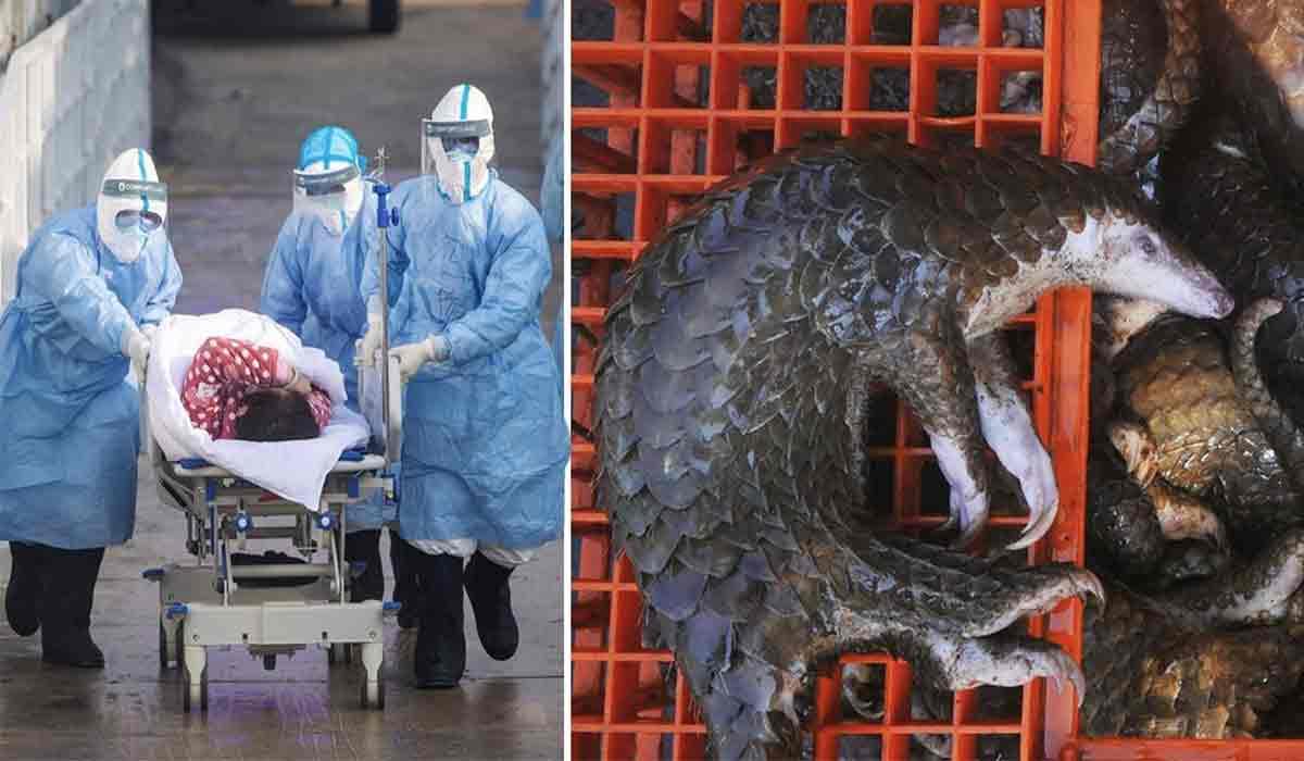 Pandemia de coronavirus, declansata de pangolin? Ce este acesta