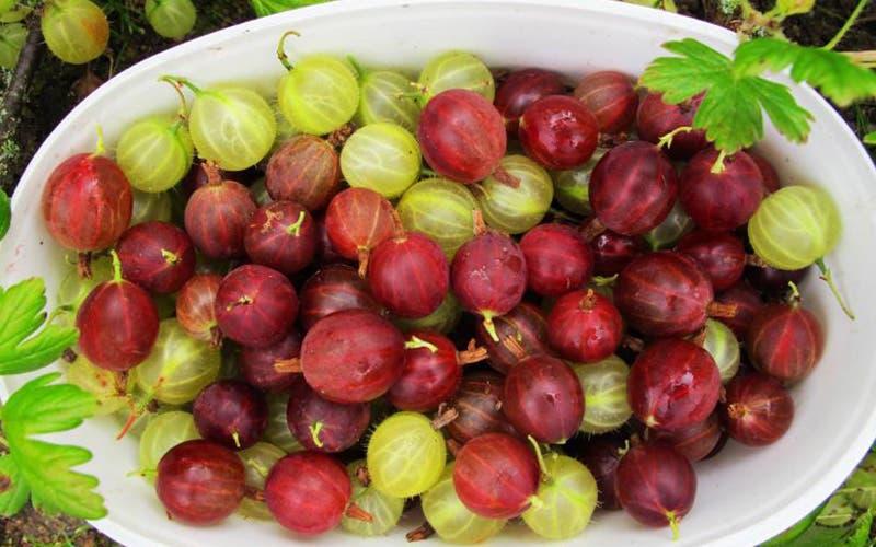 Fructul plin de antioxidanti, care are de 20 de ori mai multa vitamina C decat lamaia, se gaseste si in Romania