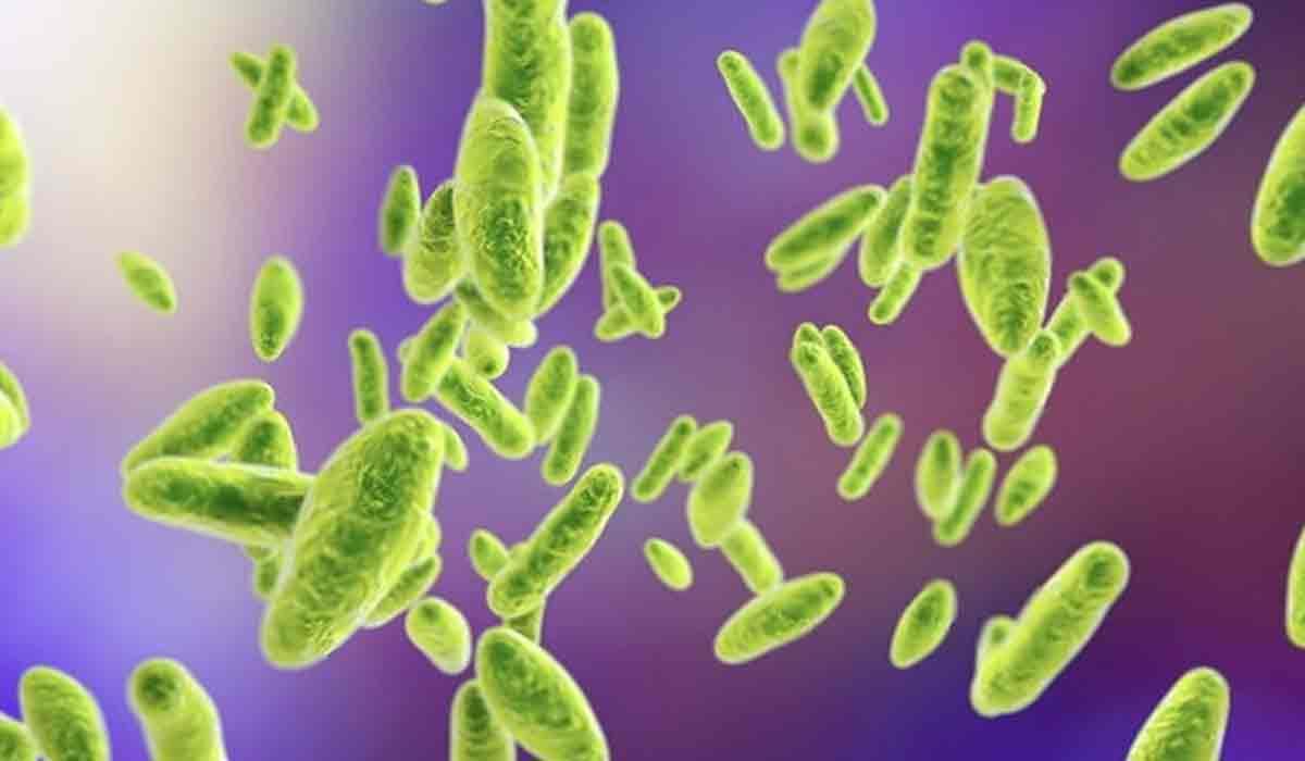 Ce este Bruceloza, boala provocata de bacteria scapata dintr-un laborator din China.