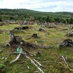 Declinul habitatelor si al speciilor protejate continua