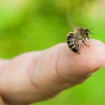 Remedii casnice pentru intepatura de albina