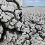 Societatea Ornitologica anunta o catastrofa ecologica: Lacul Iezer Calarasi a secat