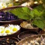 Plante si ierburi care pot imbunatati sanatatea pulmonara, vindeca infectiile respiratorii