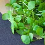 Salata de Purslane sau Verdolaga – doza de sanatate care nu ar trebui sa lipseasca de pe masa