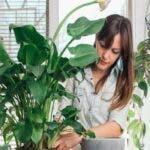 14 plante de interior care nu au nevoie de lumina