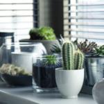 Aceste cinci plante de apartament sunt foarte bune pentru corpul si sufletul tau