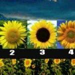 Alege o floare a soarelui si afla ce spune despre sufletul tau