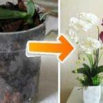 10 sfaturi simple si practice pentru a face ca orhideele sa infloreasca acasa