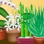 Zece plante care atrag energia pozitiva si bunastarea in casa ta. Ar trebui sa ai cel putin una.