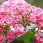 5 plante care iti vor face casa fericita