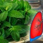 Aceste 9 plante curata plamanii si previn bronsita, astmul si racelile